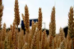 Bildquelle: flickr.com User: sektorkind